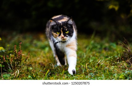 Young three-colored cat in the garden