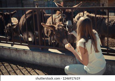 Young tourist girl with long hair feeds donkeys on the farm with fruit, ecotourism