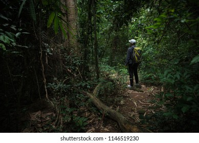 Young travler man walking in deep forest.