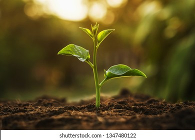 young tree growing in garden with sunrise. eco concept earth day