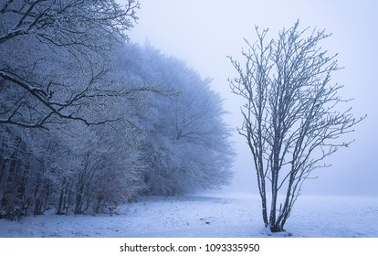 A young tree on a frosty day