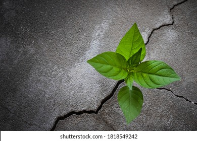 Young tree plant growing through the cracked concrete floor