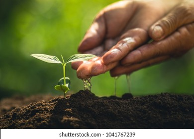 Young tree plant a tree Watering a tree in nature light and background