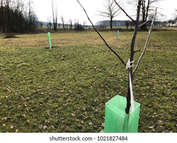 Young tree planted