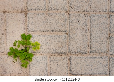 A young tree sprouts from the concrete brick floor, showing how resilient nature can be even in the hardest conditions