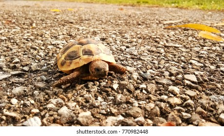 young turtle creeping on a road