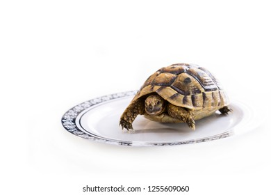 Young turtle in a plate on a white background