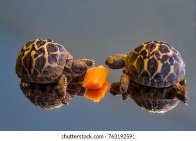 young turtles closeup