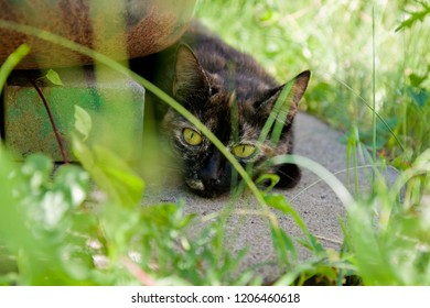 young turtoiseshell cat is hiding in the garden next to a big flower pot, she is surrounded by long green grass