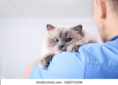 Young veterinarian holding cat in clinic