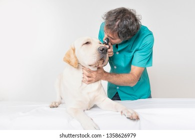Young veterinarian man looking at the ears of a dog in his clinic's office on an isolated white background