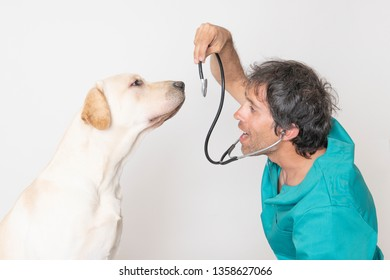 Young veterinarian smiling and playing with a stethoscope with a labrador dog in the clinic consultation
