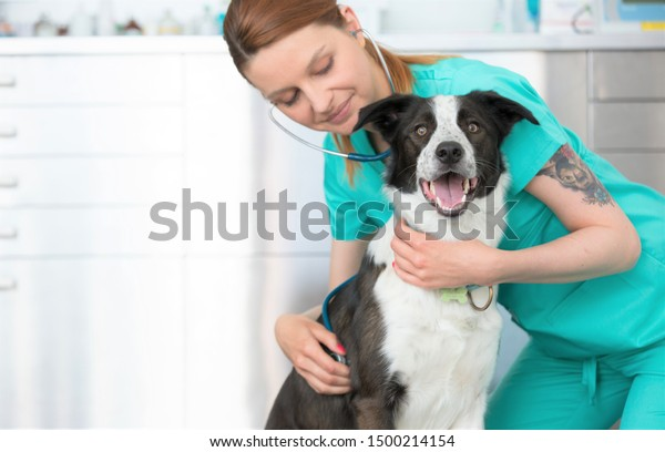 Young veterinary listening to dog's heartbeat through stethoscope at clinic