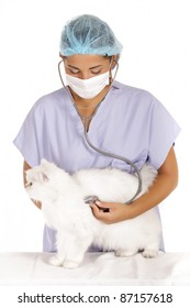 young veterinary woman examining white angora cat with stethoscope