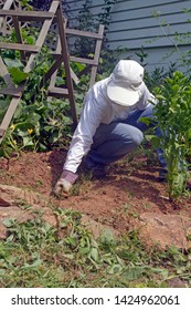 A young, well covered up woman in sun protective clothing pulls weeds in her thriving vegetable garden on a sunny summer day