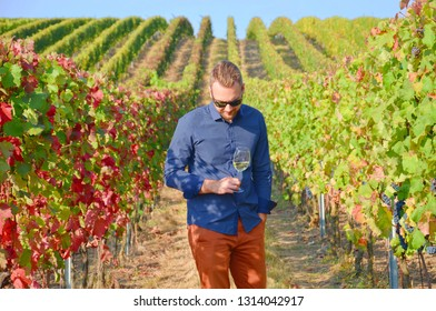 Young well dressed farmer standing in the vineyards with a glass of white wine. The vine leaves have beautiful autumn colours. The young man who is looking down is wearing a blue shirt and sunglases.