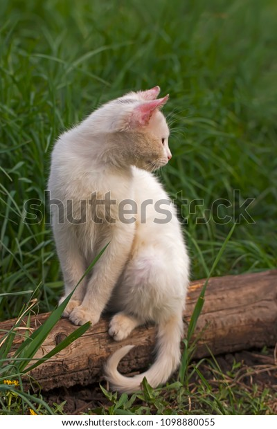 young-white-cat-sits-against-600w-109888