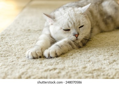 Young white cat sleeping with eyes closed - on white rug