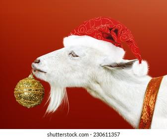Christmas Goat.Christmas Goat Images Stock Photos Vectors Shutterstock