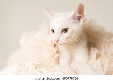 Young white kitten cat feline pet lying down on white blanket looking soft, pampered, comfortable, happy, content, relaxed, luxurious
