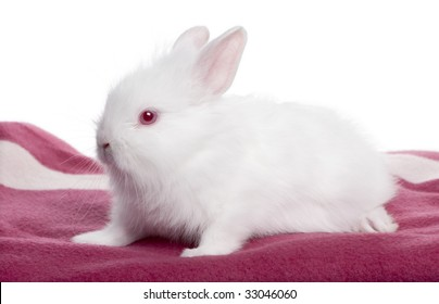 Young white Rabbit on a blanket (5 weeks old) in front of a white background