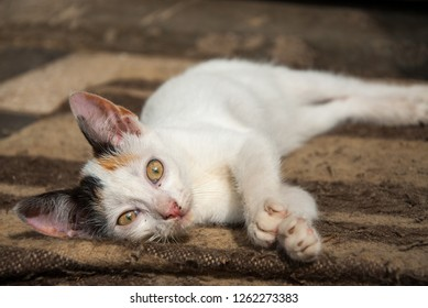 Young white stray cat lying on a carpet outside and enjoys the sun