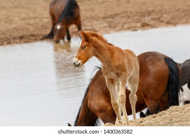 Young wild foal at watering hole