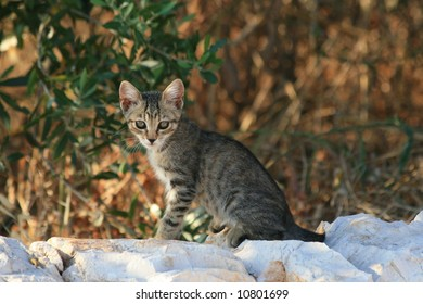 Young wild Kitten sitting on a  wall
