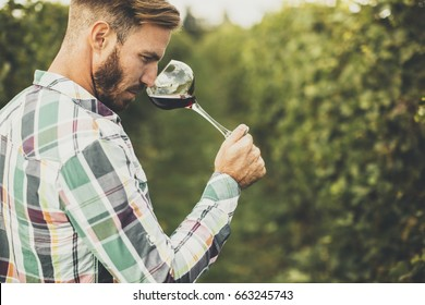 Young winemaker tasting red wine in vineyard