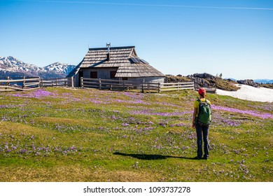 Young woman is admiring the view of mountain cottage hut on idyllic hill Velika Planina / Big Pasture Plateau in spring with crocuses in Velika Planina, Slovenia.
