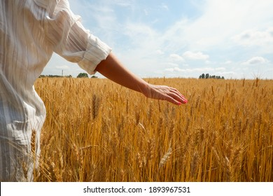 A young woman agronomist in a white shirt touches spikelets among a golden wheat field. Hands close up. Place for text.