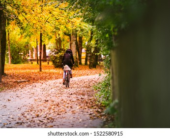 Young woman biking in fall autumn forest park with orange leaves in bavaria german munich