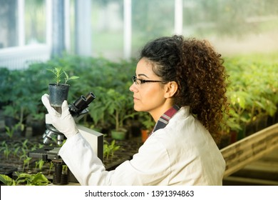 Young woman biologist holding flower pot with sprout and checking it growth beside microscope in green house. Plant protection concept