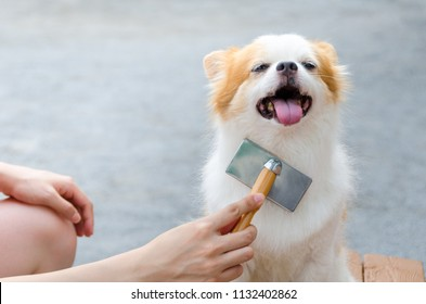 Young woman brushing her dog