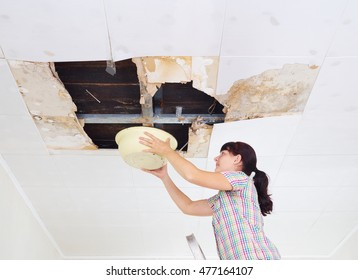 Young Woman Collecting Water In basin From Ceiling. Ceiling panels damaged huge hole in roof from rainwater leakage.Water damaged ceiling .