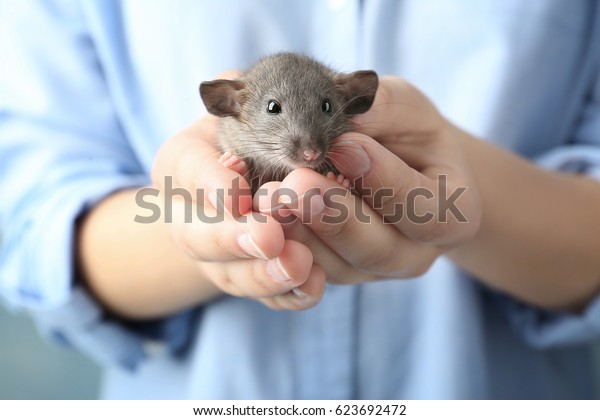 Young woman with cute funny rat, closeup