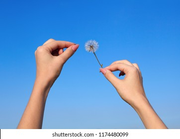 Young woman and dandelion in a blue sky