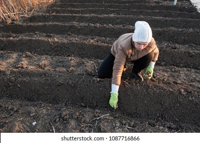Young woman dug up garden bed and planted potatoes on her home plot. Spring works in garden. Warm black earth, soil
