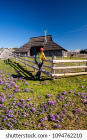 Young woman is enjoying the view of Mountain hut or house on idyllic hill Velika Planina / Big Pasture Plateau in spring with crocuses in Velika Planina, Slovenia.