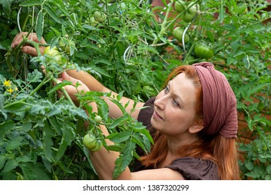 Young woman is examining her tomato plants in her garden