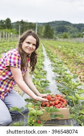 Young woman farmer next to a cardboard box full with fresh red strawberries on the field
