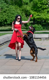 Young woman with a fashion red dress playing with her purebred Rottweiler dog