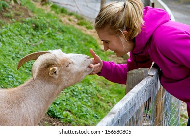 Young woman feed a goat