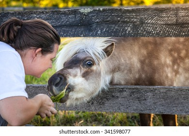 Young woman is feeding grass to Shetland Pony on a farm in Kentucky