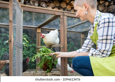 Young woman feeding her free range chickens. Egg laying hens and young female farmer. Healthy organic eating lifestyle. Sustainable farm.