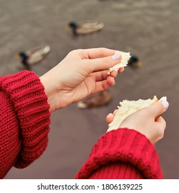 Young woman feeds birds on autumn laker, hand close-up