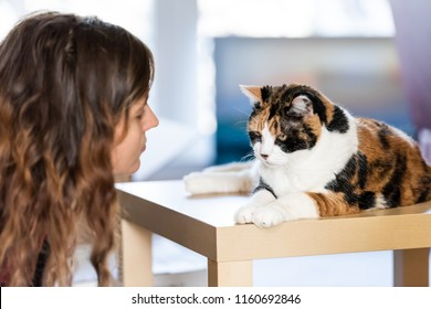 Young woman, female owner head, face with calico cat sitting on top of table in home, living room, angry with big, large open eyes, looking down