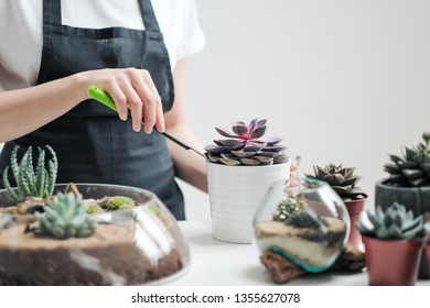 Young woman florist and gardener. Light background, white T-shirt and apron. Cares and grows flowers and plants in pots. Smiles and works with pleasure.