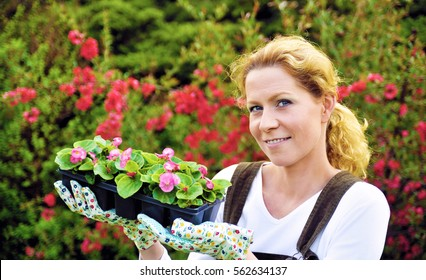 Young woman gardening, holding young flower plants in her hands, container-grown plant, woman planting begonia seedlings in garden