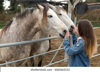 Young woman giving affection to some horses in a refuge of the province of Alicante in Spain.